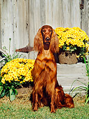DOG 06 CE0032 01