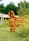 DOG 06 CE0033 01