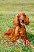 DOG 06 CE0035 01