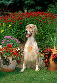 DOG 06 CE0039 01