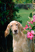 DOG 06 CE0042 01