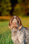 DOG 06 CE0045 01