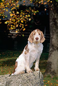 DOG 06 CE0047 01