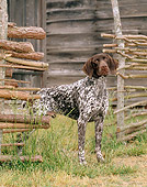 DOG 06 CE0050 01