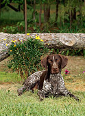 DOG 06 CE0051 01