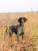 DOG 06 CE0053 01
