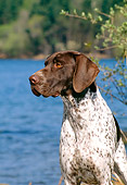 DOG 06 CE0057 01