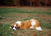 DOG 06 CE0059 01