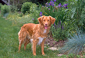 DOG 06 CE0061 01