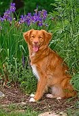 DOG 06 CE0062 01
