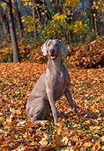 DOG 06 CE0065 01