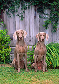 DOG 06 CE0066 01