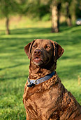 DOG 06 DB0005 01