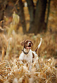 DOG 06 DB0007 01