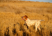DOG 06 DB0011 01