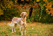 DOG 06 DB0012 01