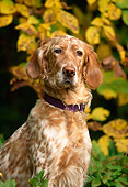 DOG 06 DB0014 01