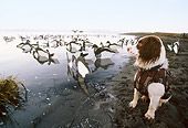 DOG 06 DB0015 01