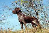 DOG 06 DC0025 01