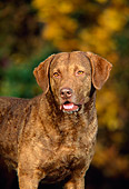 DOG 06 DC0041 01
