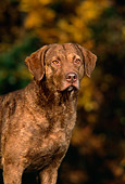 DOG 06 DC0041 03