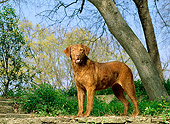DOG 06 DC0046 02