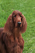 DOG 06 DC0052 01