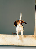 DOG 06 DC0066 01
