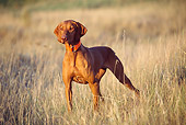 DOG 06 DS0008 01
