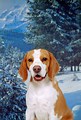 DOG 06 FA0004 01
