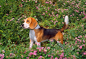 DOG 06 FA0007 01