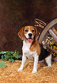 DOG 06 FA0011 01