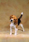 DOG 06 FA0012 01