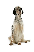 DOG 06 JD0001 01