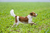 DOG 06 KH0004 01