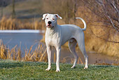 DOG 06 KH0005 01