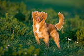 DOG 06 KH0006 01