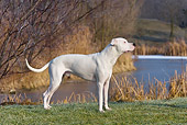 DOG 06 KH0016 01