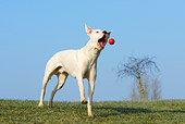 DOG 06 KH0017 01