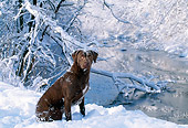 DOG 06 LS0004 01