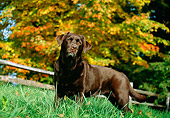 DOG 06 LS0011 01