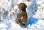 DOG 06 LS0012 01