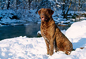 DOG 06 LS0013 01