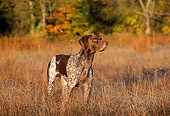 DOG 06 LS0014 01