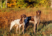 DOG 06 LS0015 01
