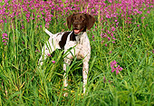 DOG 06 LS0016 01