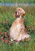DOG 06 LS0019 01