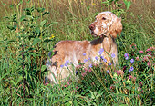 DOG 06 LS0020 01