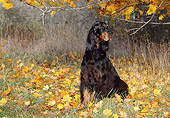 DOG 06 LS0022 01