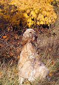 DOG 06 LS0023 01